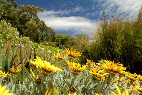 528 botanicka zahrada pri Gairlochu